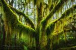 Antarctic Beech by DrewHopper