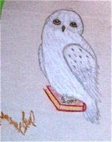 Hedwig by MinervaWhite