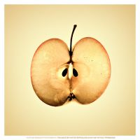 Apple by DREAMCA7CHER