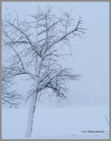 One Tree in a Blizzard by Mogrianne