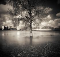 Tree and river... by denis2