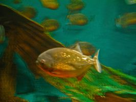 Hot Fish in Cool Water by Stuckindoors
