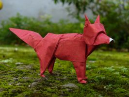 Fox or Zorro by Figuer