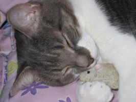 Sleeping with Mouse Toy by Geak-of-Nature