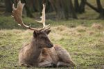 Deer Stock 30 by Malleni-Stock