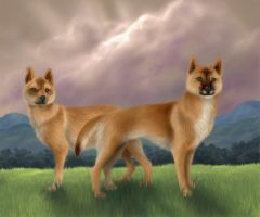 New Guinea Singing Dogs by MoonsongWolf