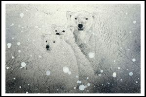 Polar Bears by henderson