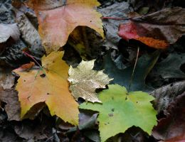Autumn Gold by GlassHouse-1