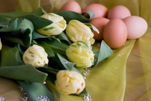 Egg and Flower by archaeopteryx-stocks
