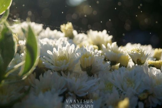 Rain over the flowers by vaavesur