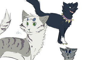 cats by Fluff-butts