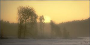 cold morning by Hartmut-Lerch