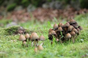 MUSHROOMS :) by pegasuslolly