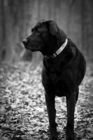 Perfect Pose...for a dog, anyway by AppareilPhotoGarcon