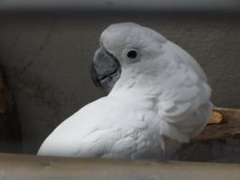 White Parrot 1 by In2FF7