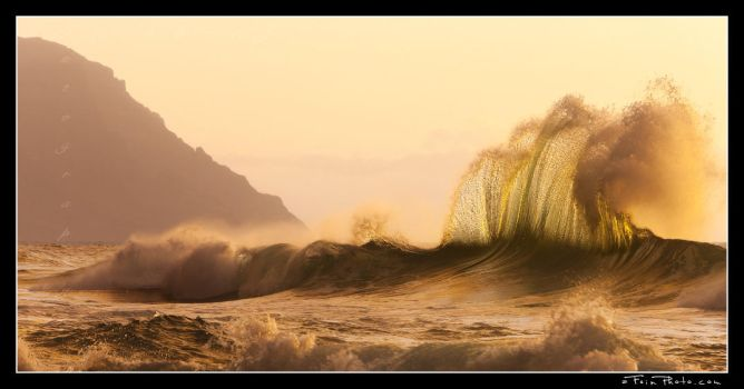 Wavehawk by aFeinPhoto-com