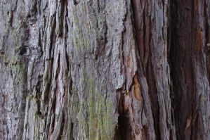 Bark by PentaxInvasion