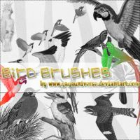 bird brushes by gagauniverse
