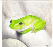 Watercolor frog by miss-frog
