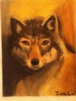 Wolf by bloom987654322