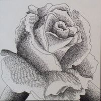 Stippled Rose by Ab-bey