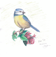 Blue Tit Watercolours by Fantailed-Hedgehog