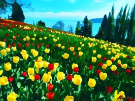 Tulips ( Tulipas) by duzetdaram