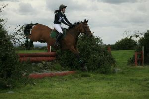 Cross country 25 by Kennelwood-Stock