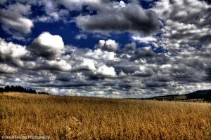 The field and the clouds HDR by xMAXIx