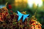 Origami Butterfly by FoldedWilderness