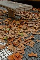 Leaves by anahuac