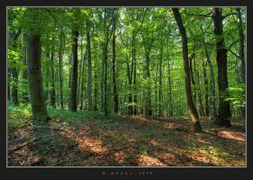 In The Woods I by HogRider