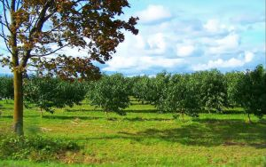Orchards by cixelsiD-1