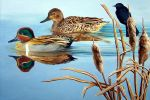 Green-winged Teals by HOULY1970