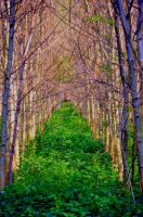 wooden arch by MoonBeam3100