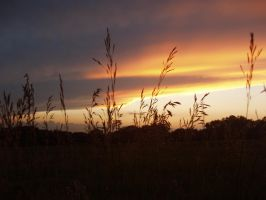 Another Wheat Sunset by Booksprout