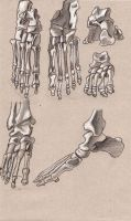 foot's bones by Lemures87