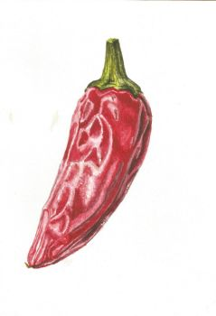 Chilli by alter-ipse-amicus