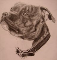 Staffie - Kia by kallerhult
