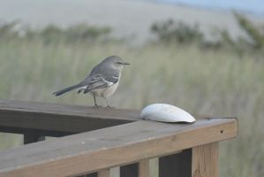 Bird On the Porch Railing,Looking Toward Grass 2 by Miss-Tbones