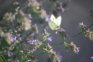 White butterfly and flowers stock by Foxytocin