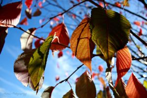 Fall Colours on Campus by Michies-Photographyy