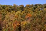 Autumn Forest by LadyRStock