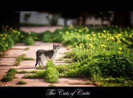 Cats of Crete by calimer00