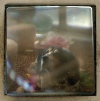 Through the Viewfinder 1 by NikonCha