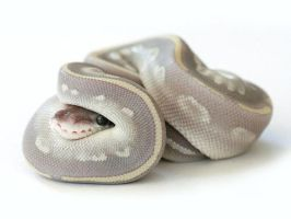 Cute snake curled up by AstralGuardian70775