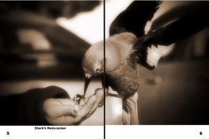 Photo Book Animals in Canada's Rockies Page 5-6 by Joe-Lynn-Design