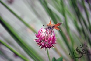 Butterfly #72 by Shayele82