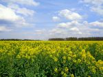 yellow spring #1 by Mittelfranke