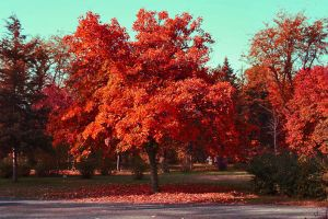 Red Trees In City Park by dardaniM